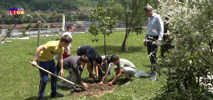 IL-sadnja-drveca2 Eko junaci u projektu očuvanja životne sredine (VIDEO)