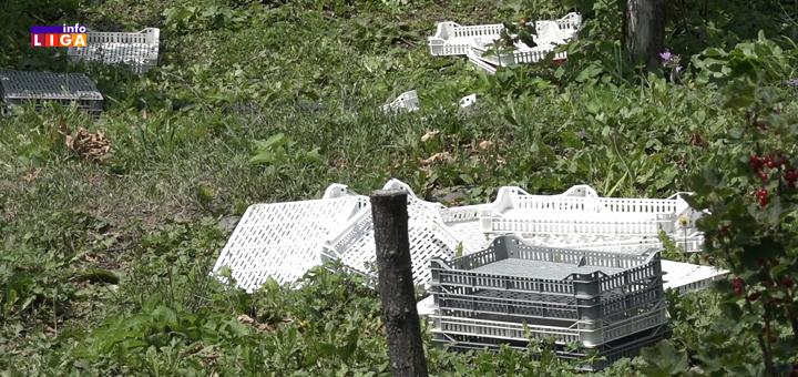 IL-malina-gajbe Ivanjica: Ojadili ih lopovi, 300 kilograma malina nestalo za noć (VIDEO)