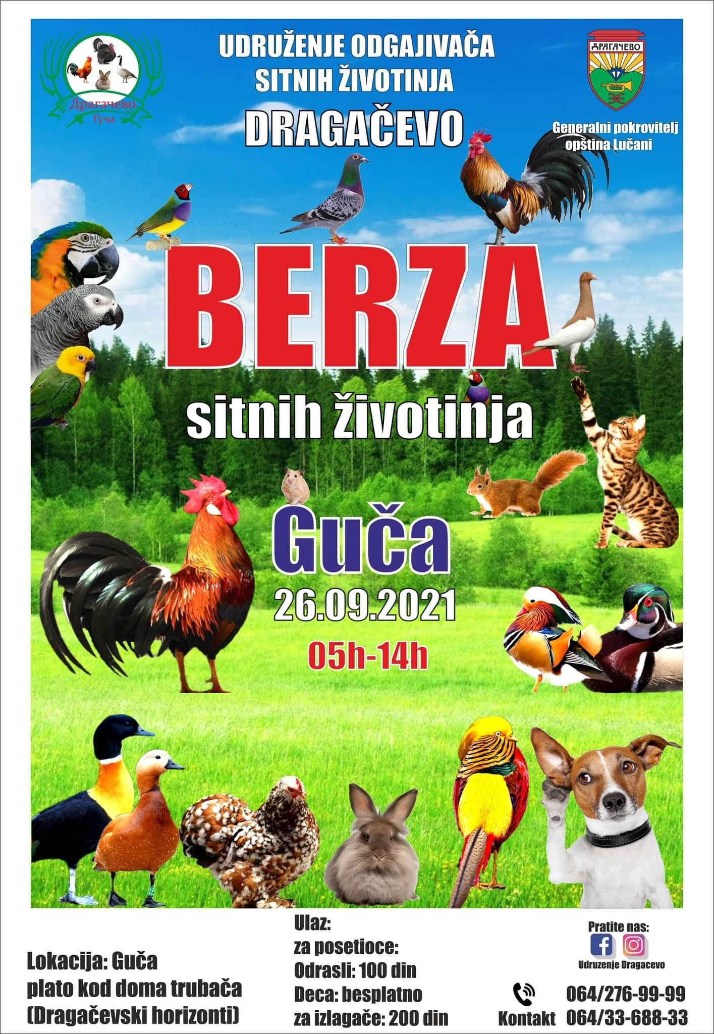 IL-berza-sitnih-zivotinja-Guca-1 Prva berza sitnih životinja u Guči (VIDEO)