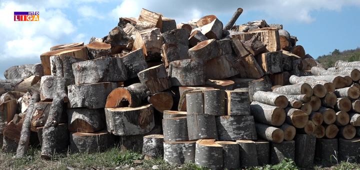 IL-drva-katici- Drvo palo na Ivanjičanina i usmrtilo ga na licu mesta
